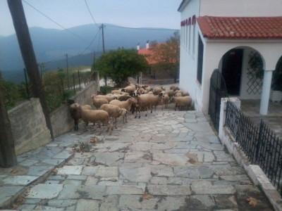 ΚΟΚΚΩΤΟΙ 2